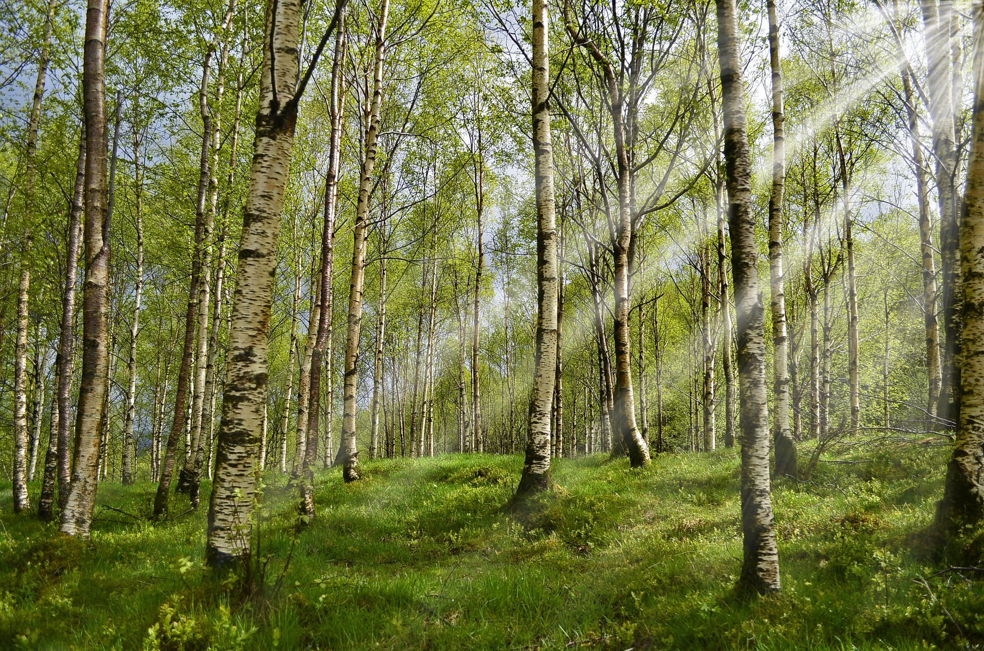 KDFB Spiritueller Impuls Birkenwald